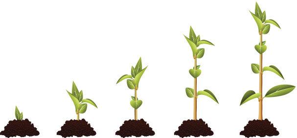 évolution d'une plante